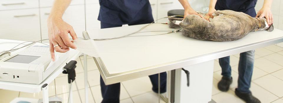 Tierarztpraxis-Kutzner-Slider-3